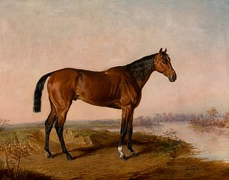 Kentucky (horse) - Image: Kentucky (USA)