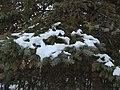 Kerry Wood Nature Conservatory (32856097511).jpg
