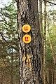 Ketchum Run Gorge (13) (15954796459).jpg