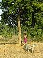 Khajuraho 21 DSCN3189 (40771651262).jpg