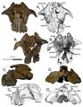 Khunnuchelys lophorhothon holotype skull.png