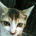 Kitten .jpg
