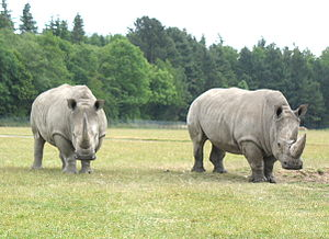 Knuthenborg Safaripark - Rhinoceroses at the Knuthenborg Safaripark