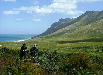 Fynbos - Image: Kogelberg Biosphere Reserve city of Cape Town