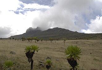 Mount Elgon - Koitobos peak, Kenya