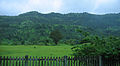 Konkan Railway - views from train on a Monsoon (37).JPG