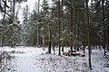 Krasnogorsky District, Moscow Oblast, Russia - panoramio (93).jpg