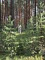 Krasny Bor, Karelia, memorial cemetery (2018-08-04) 04.jpg