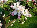 Květ stromu.JPG