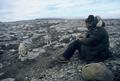 L. David Mech studying Arctic wolves.png