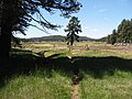 LAGUNA MEADOW FROM CHICO RAVINE TRAIL - panoramio.jpg