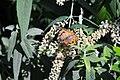 LD Butterfly (2).jpg
