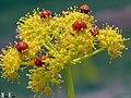 Ladybird's Apartments, Happy Nowruz 1392 آپارتمان کفشدوزک ها، تقدیم به همسر مهربانم - panoramio.jpg