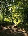 Lane at Blackberry Barn - geograph.org.uk - 1521900.jpg