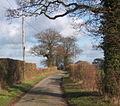Lane from Coddenham towards Gosbeck - geograph.org.uk - 672593.jpg