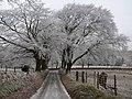 Lane to Ratlinghope (2) - geograph.org.uk - 1113771.jpg