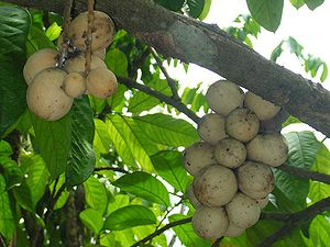 Valencia, Negros Oriental - Lanzones fruits grown in Valencia are exported to other towns.
