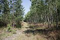 Lasy Łączańskie - panoramio (7).jpg