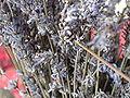 Lavender dry.JPG
