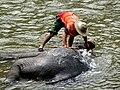 Le bain des éléphants 03.JPG