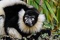 Lemur (26992581058).jpg