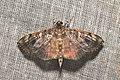 Lepidoptera (16050448892).jpg