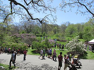 Neighborhoods in Boston - Lilac Sunday, Arnold Arboretum, Jamaica Plain