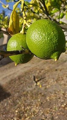 jugo de limon valor nutricional