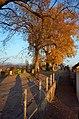 Lindenhof (Rapperswil) 2012-11-14 16-15-13.JPG
