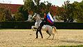 Lipizzaner Horse.jpg