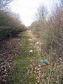 Litter-strewn footpath in Hainault Forest - geograph.org.uk - 1199522.jpg
