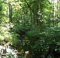 Loantaka Brook Reservation bikeway stream through woods.jpg