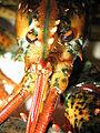 Lobster 06.jpg