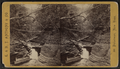 Looking down the glen, Buttermilk Ravine, Ithaca, N.Y, by E. & H.T. Anthony (Firm).png