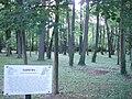 Lužní les.jpg
