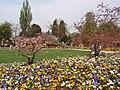 Luisenpark panoramo da ĝardenaj violoj.jpg