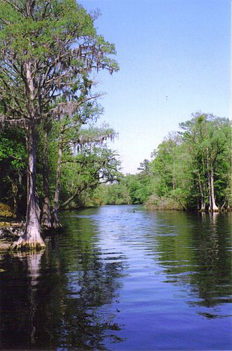 Blackwater river - The Lumber River as seen from the boat launch at Princess Ann near Orrum, North Carolina.