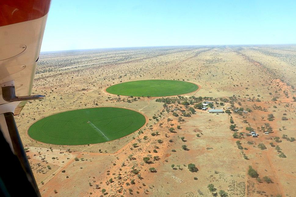 Luzerne Kalahari