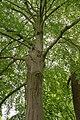 Münster, Park Sentmaring -- 2018 -- 0001.jpg