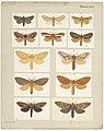 MA I437902 TePapa Plate-XLI-The-butterflies full.jpg