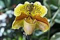 Mainau - Orchideen - Frauenschuh 003.jpg