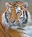 Makari's Whiskers edit2.jpg