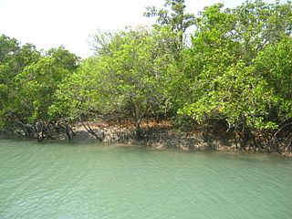 Sundarbans The worlds largest mangrove forest in the delta of Ganges, Meghna and Brahmaputra rivers