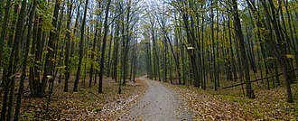 Manistee National Forest - Image: Manistee National Forest