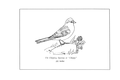 Manual of Bird Study 0043-14.png