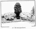 Manual of Gardening fig017.png
