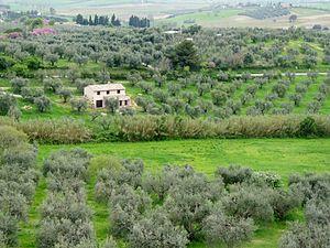 Maremma - Landscape near Magliano in Toscana