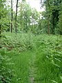 Margery Wood - geograph.org.uk - 180457.jpg