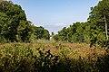 Marsh land at Widewater.jpg