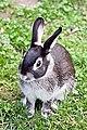 Marten Rabbit.jpg